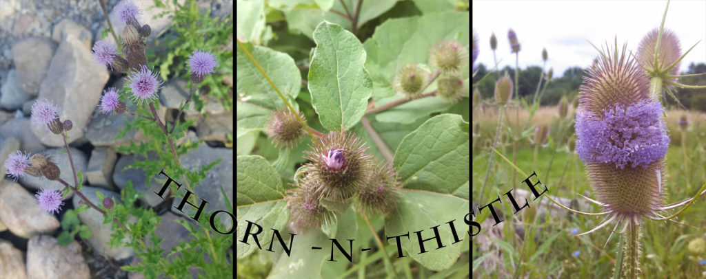 Thorn n Thistle - Thistle collage